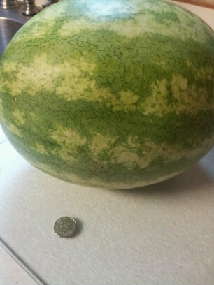 Life Hack - Don't have a knife? Use a quarter to cut the watermelon and karate chop it in half! Tested on Pintertesting.com
